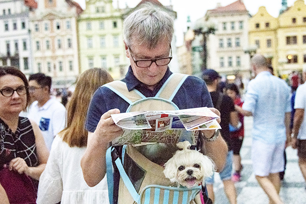 Foto Friday - a tourist with a small dog in a bag, reading a map in a city square