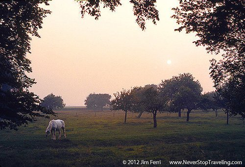 Foto Friday - a horse in a pasture, Normandy. France