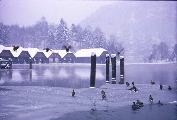 Foto Friday - ducks on a snowy mounntain lake