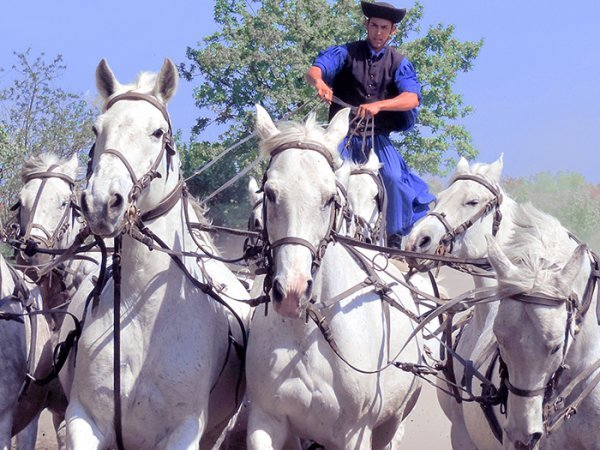 Foto Friday - a man riding six white horses