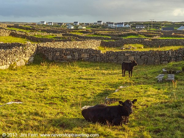 Ireland - Aran Islands pastures-DSC00079--B
