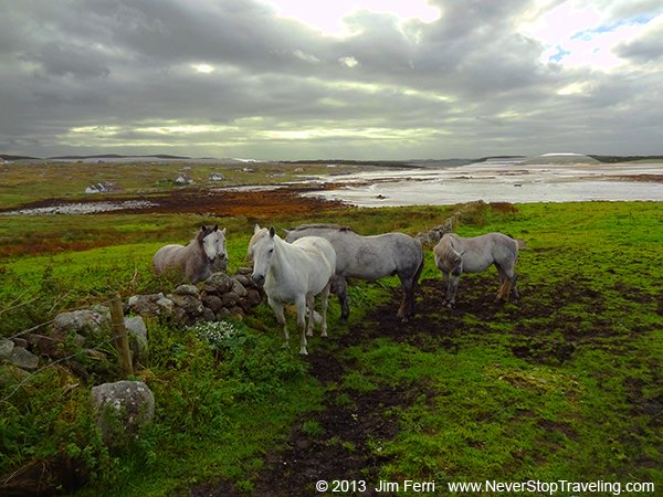 Foto Friday - Connemara horses, Ireland
