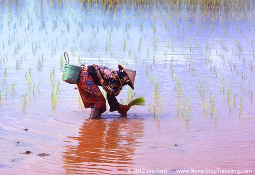 Foto Friday - woman in a rice paddy, Borneo, Malaysia
