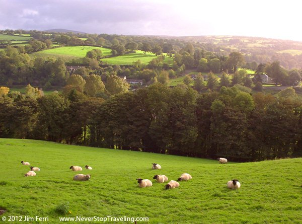 Sheep, County Kilkenny, Ireland