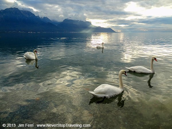 -Switzerland - Montreux- swans Lake Geneva-DSC08570