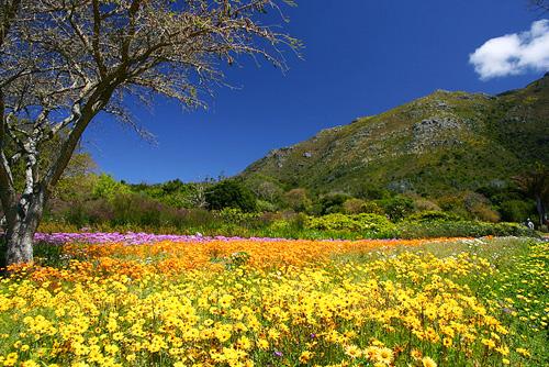 http://www.neverstoptraveling.com/wp-content/uploads/2011/07/Kirstenbosch-National-Botanical-Garden.jpg