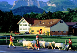 farm children with goats in Switzerland