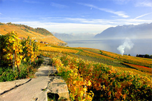 Vineyards in autumn in Switzerland