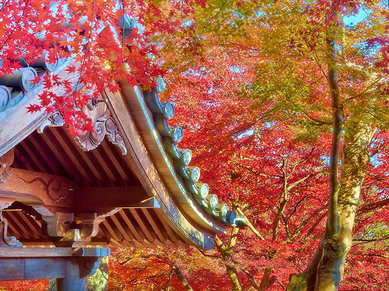 Buddhist temple in the fall in Japan