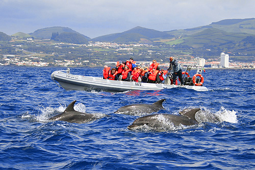 Whale-watching in Portugal