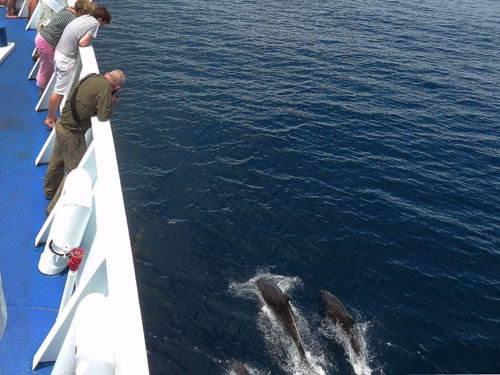 Cruising with dolphins en route to Española Island