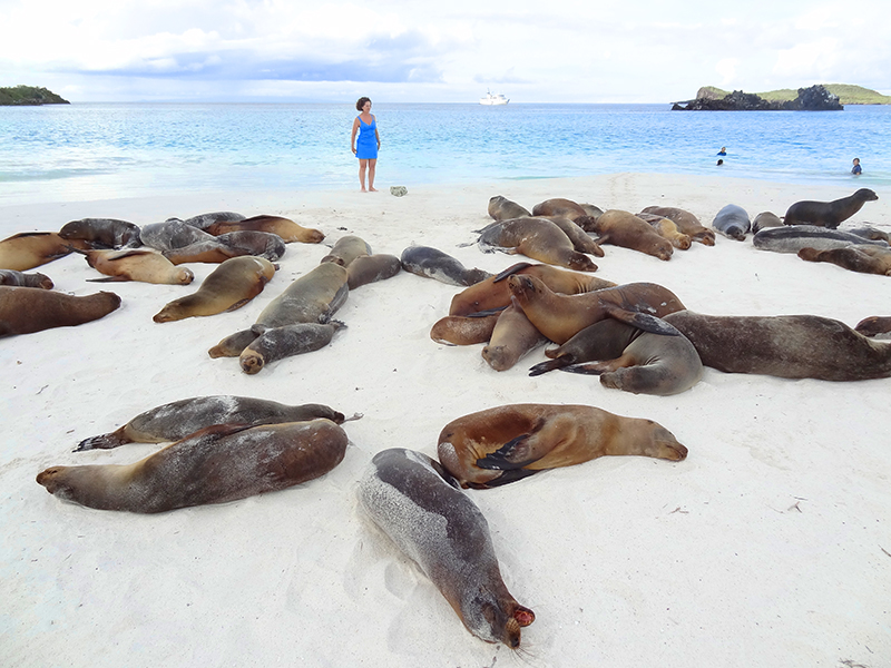 a woman with sea lions in the Galapagos Islands