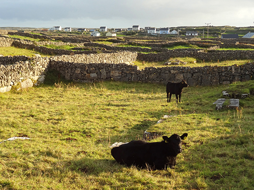 Pastures on Inishmore