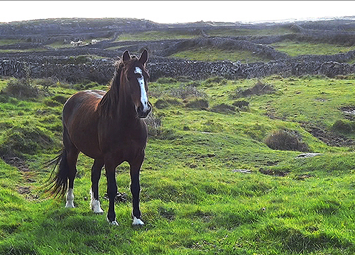 Early morning on Inishmore Aran Islands
