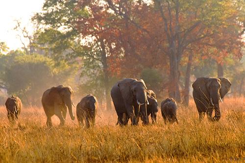 photo: Remote Africa