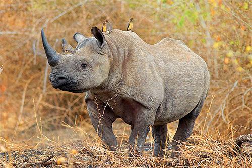 photo: Singita Game Reserves