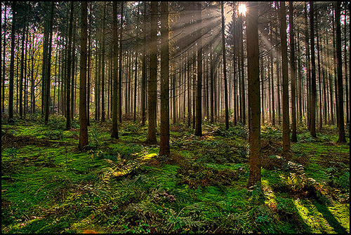 The Black Forest / photo: fatboyke top 10 places in Germany
