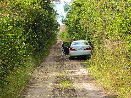 -Florida - Loop Road-in Floridas Everglades