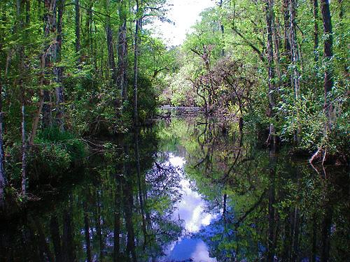 -swamp in Floridas Everglades
