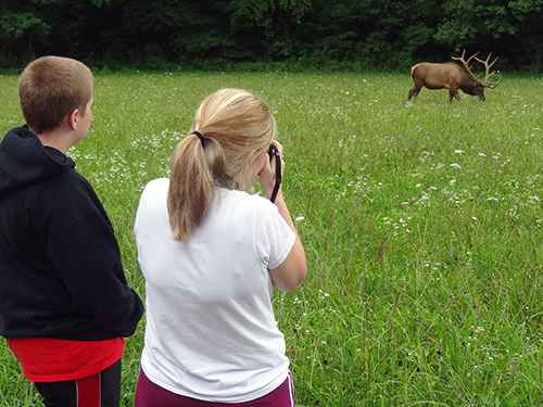 Photographing grazing elk on Route 441