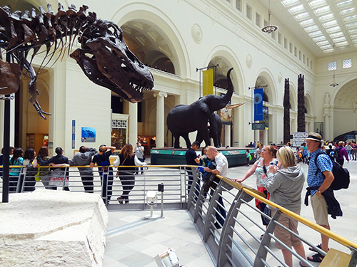 "The Tyrannosaurus Rex ""Sue"" at the Field Museum in Chicago"