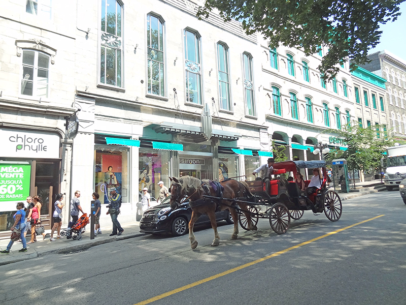 A hourse and carriage on a street during a tour of Quebec