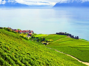 The Lavaux Vineyard Terraces