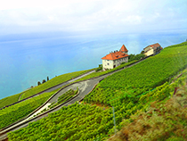 Lavaux Vineyards overlooking Lake Geneva in Montreux