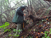 Spino and Silvano Montefiore in Italy - Truffle Hunting in Italy