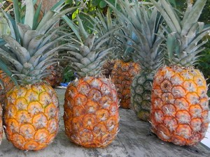 Sweet Dominican pineapples in Samana Dominican Republic / photo: Carla Marie Rupp