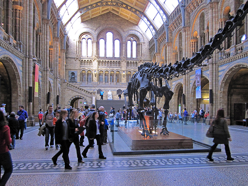 people visiting the Museum of Natural History, one of teh best things to do in London