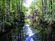 The Everglades / photo: Jim Ferri