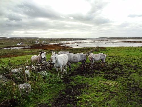 The Connemara countryside