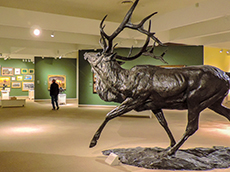 Scuplpture of an elk at the Whitney Western Art Museum in Cody