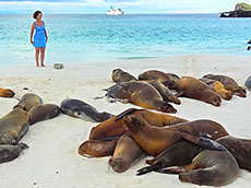 Sea lions on beach, Galapagos Islands, Ecuador