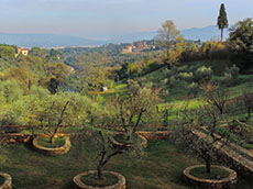 Trees and hills in the Tuscany countryside