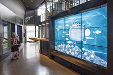 A large tank in an aquarium in Québec