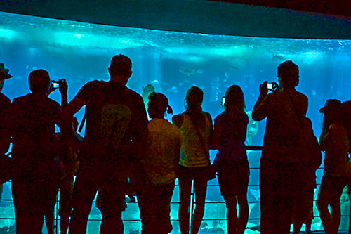 people sanding by a large aquarium tank in Lisbon