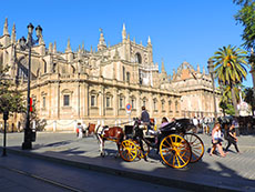 horse and carriage near a gothic cathedral in Seville