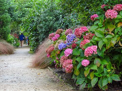 people walking on a flower-lined path in Ireland