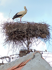storks standing in a nest on a house