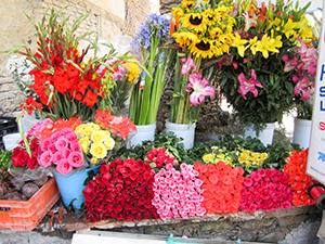 groups of brighly colored flowers in San Miguel de Allende