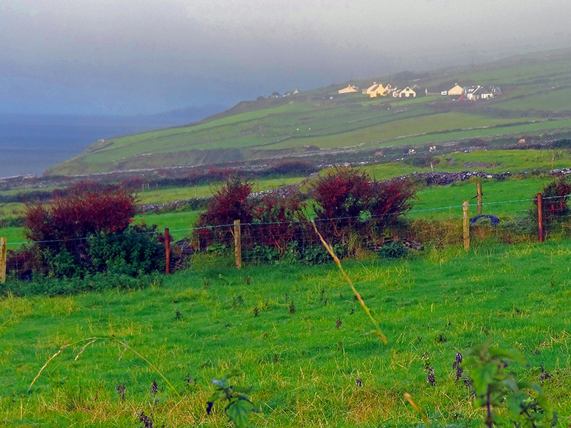 houses in a field - Killarney - hotels in Dingle
