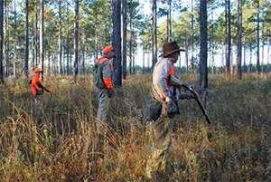 hunters walking through a field in Florida