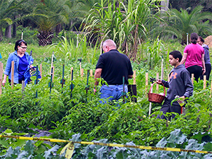 people in a large vegetable garden in Florida