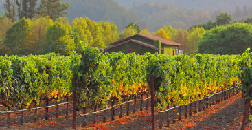 Napa Valley, California's Beautiful Wine Country