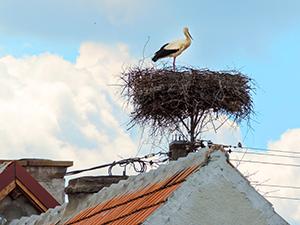 stork nest on a house