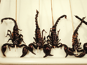 fried scorpions at a food market in Beijing