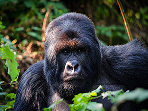 a gorilla - best places to travel