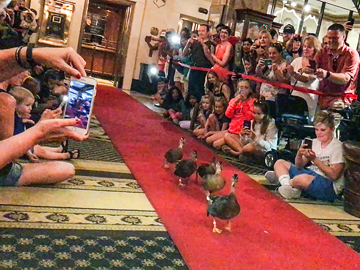people looking at ducks in a hotel